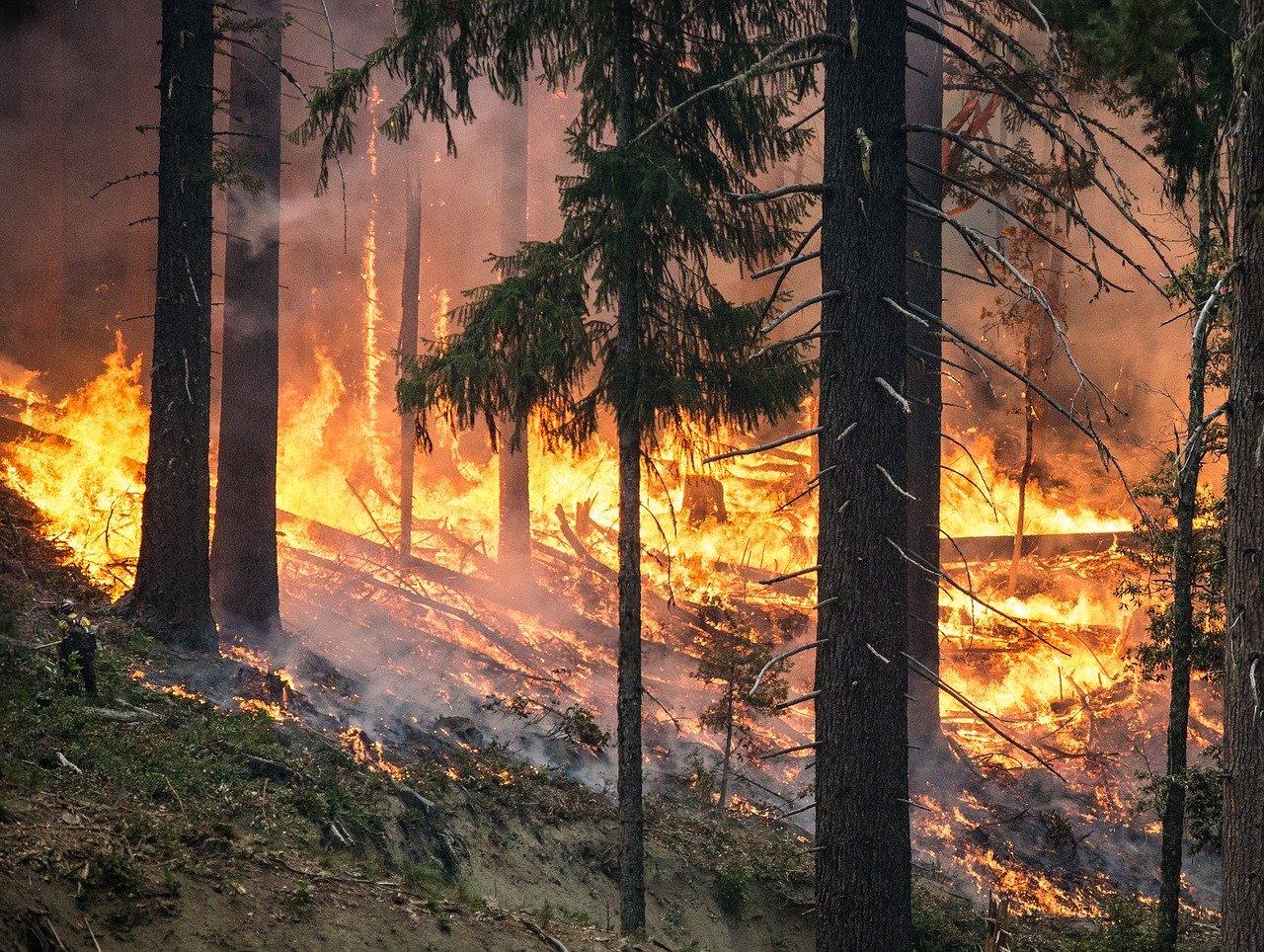 Waldbrandgefahr im Landkreis Tuttlingen
