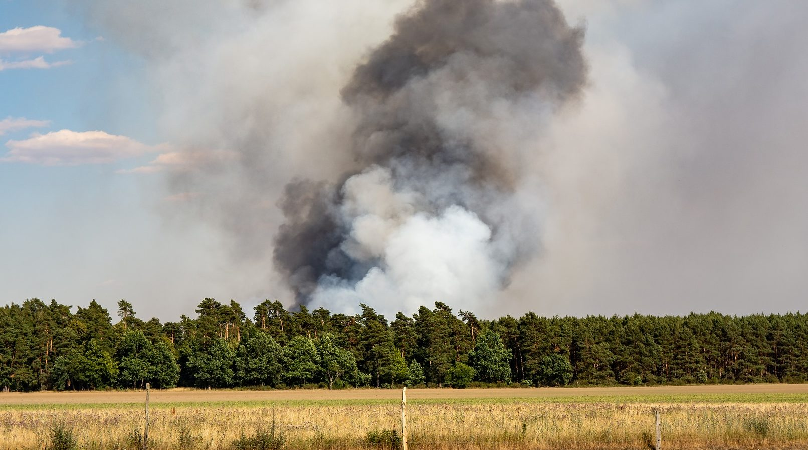 Waldbrandgefahr und Feuer im Wald